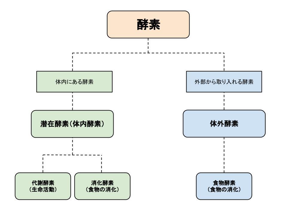 酵素 体内酵素 体外酵素